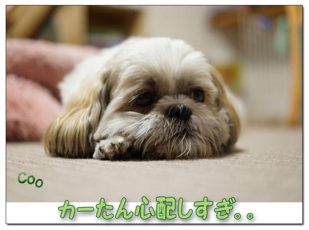 13-09-03_2296.jpg
