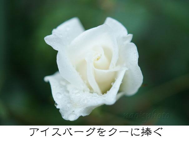 13-09-15_2502.jpg