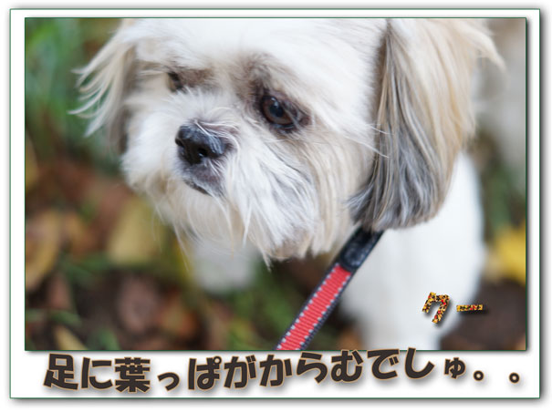 13-11-04_3020.jpg