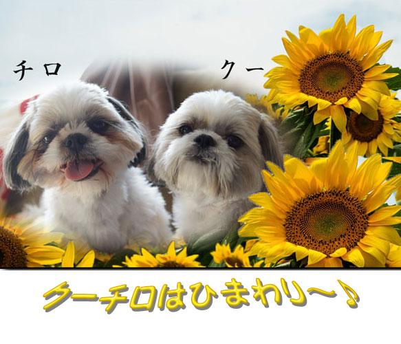 OHT96_genkihimawari500.jpg