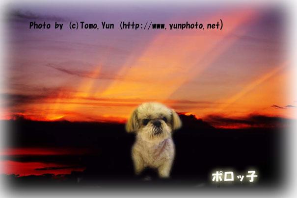 yun_10000zx.jpg
