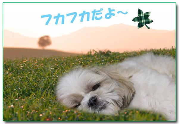yun_976.jpg