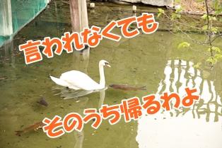 20130506_2.jpg