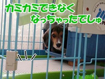 20130727_3.jpg