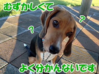 20130927_1.png