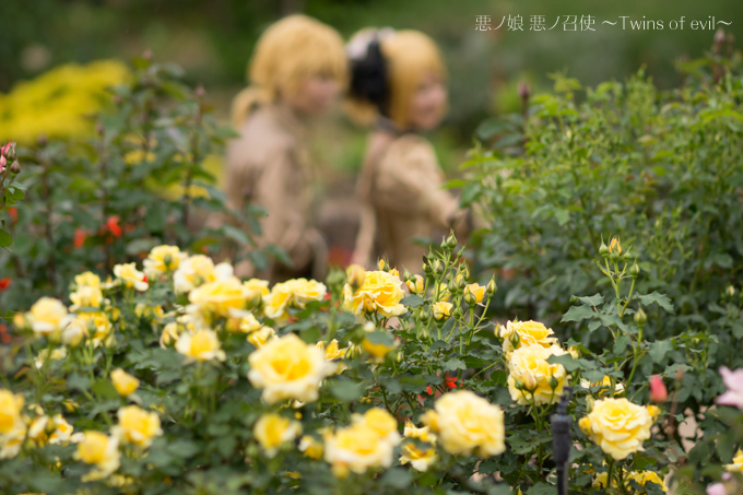 photo_20130610220210.jpg