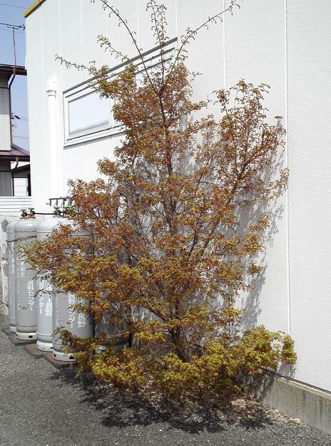 春があふれる (4)