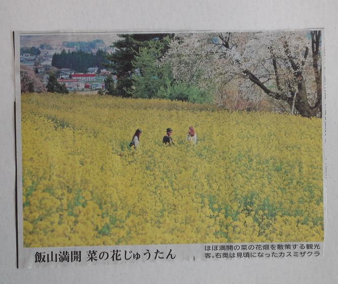 飯山菜の花