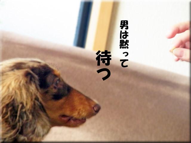 RIMG0033のコピー