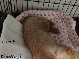 ひんやり枕2