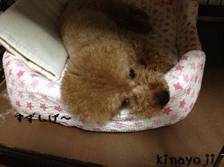 ひんやり枕3