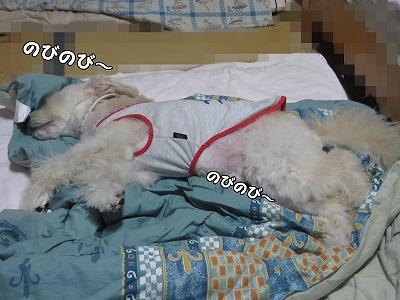 おやすみの寝床3