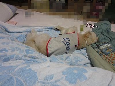 おやすみの寝床4