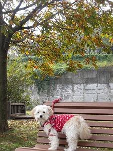 いつもの公園で紅葉2