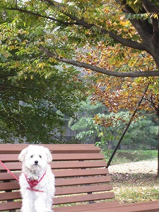 いつもの公園で紅葉3