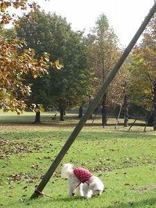 いつもの公園で紅葉5