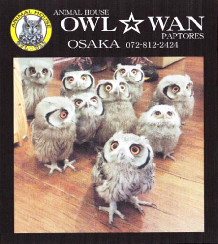 250604owlwan-01.png