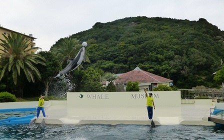 イルカ 軽やかなジャンプ