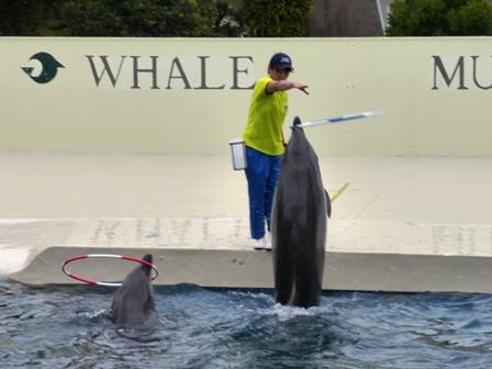 口でフラフープ イルカ