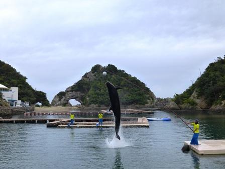 クジラショー オキドンドウ