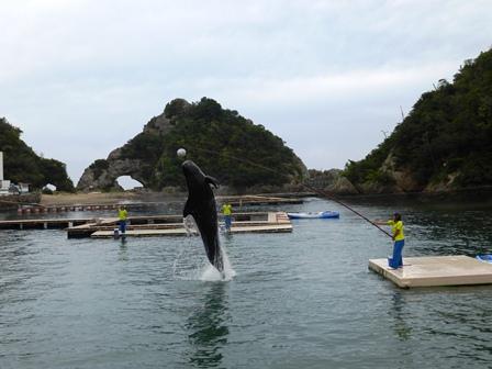 クジラショー 大きな頭