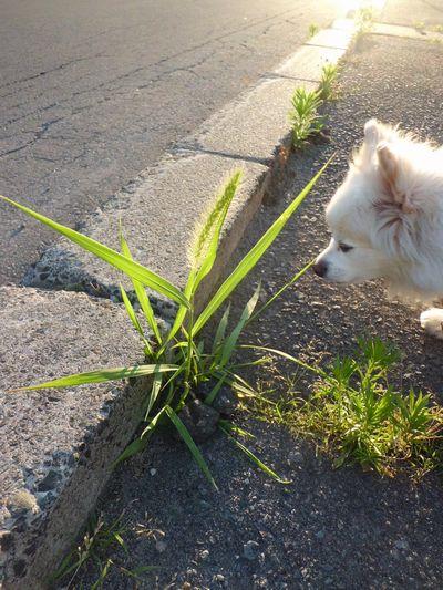 雑草と呼ばれる