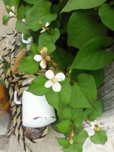 空き家の花