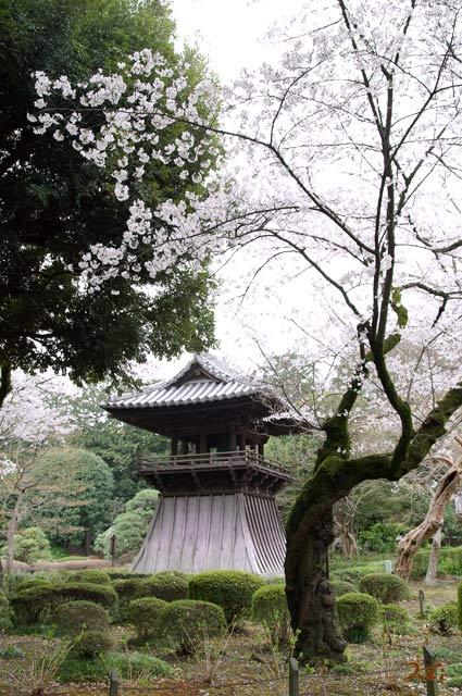 20130331桜_ばんな寺11
