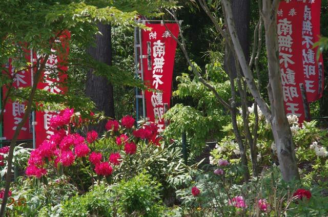 20130518ぼたん祭り_龍願寺16