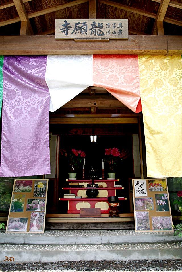 20130518ぼたん祭り_龍願寺02
