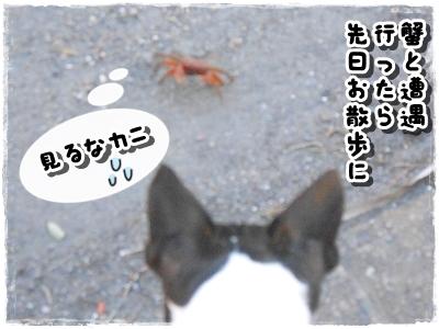 蟹VSムッタ