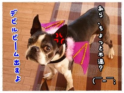 PA126667.jpg