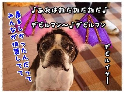 PA126683.jpg
