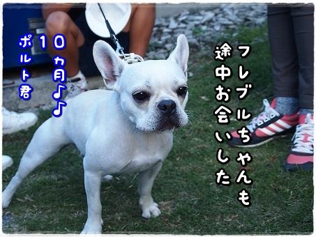 PA277973.jpg