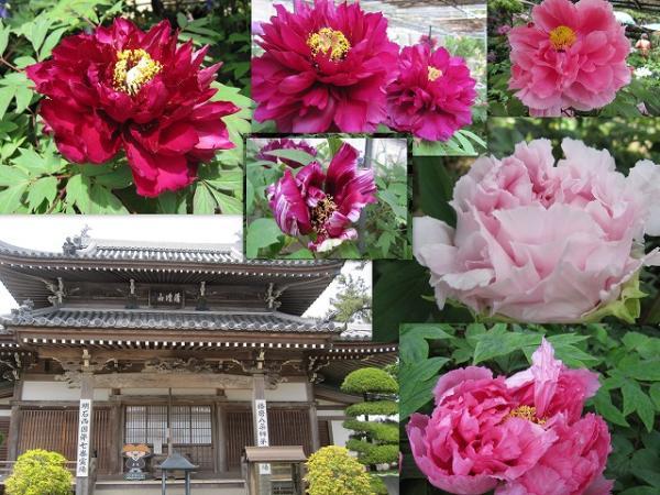 s-2013-04-29 ha1