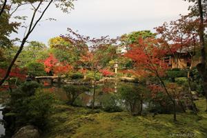 依水園紅葉