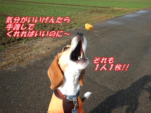 DSCN6097_20141116181621f1e.jpg