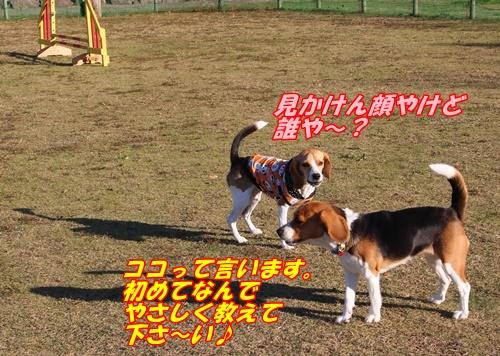 IMG_0273_20141029134032d4d.jpg