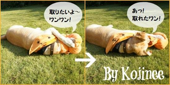 小次郎ハロウィン Collage2