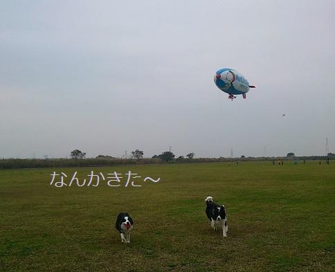 DSC_0987.jpg