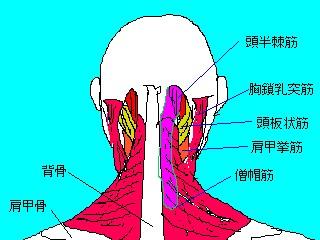 首肩周辺の筋群