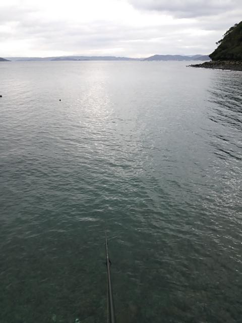 エギング釣果5