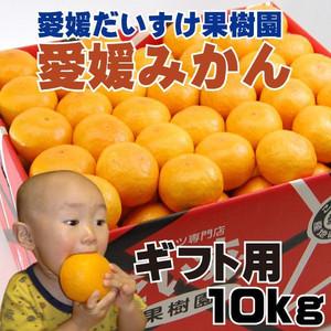 ehimedaisuke_mikan-02.jpg