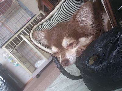 ショコ眠い4