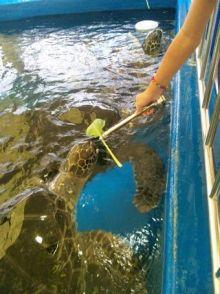 シングル・スマイル ver ブロぐ 時々ストリングス-松島水族館カメ