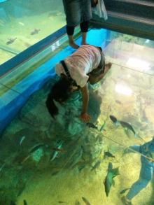 シングル・スマイル ver ブロぐ 時々ストリングス-松島水族館水槽の上