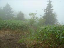 シングル・スマイル ver ブロぐ 最近なんだかストリングス-恵那山2
