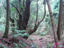 シングル・スマイル ver ブロぐ 最近なんだかストリングスでヤッホー!-武奈ヶ岳43