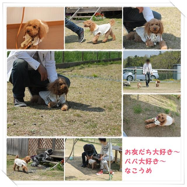 4cats_20130510200109.jpg