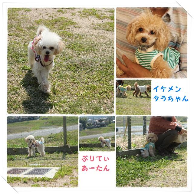 5cats_20130510200113.jpg